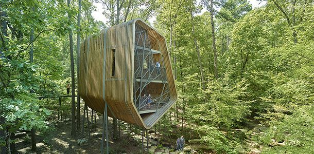 Modus Studio : The Evans Tree House